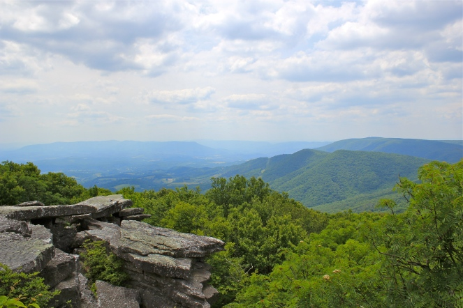 Home of cliff saxifrage: Bald Knob, VA