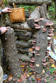 shiitake production at home