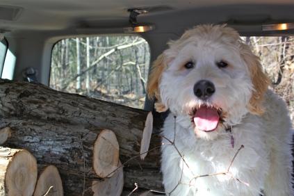 taking the oak logs home