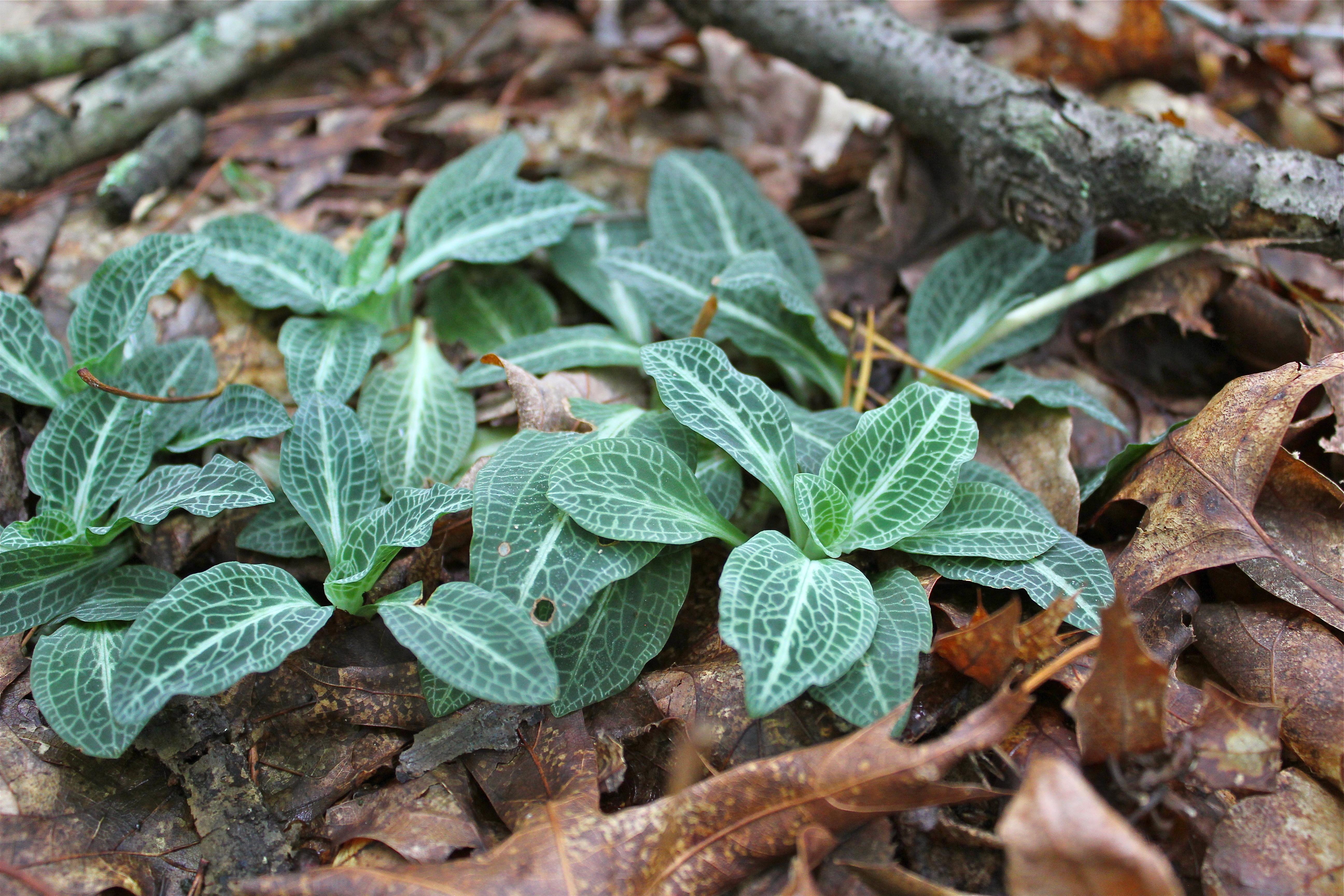 Identify Dried Wildflowers