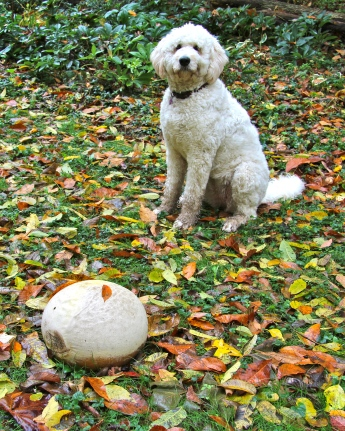 Mari with October puffballs