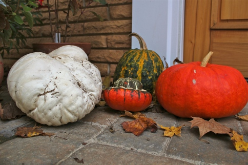 Giant Puffball in October: Happy Halloween!
