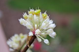 Ramp flower