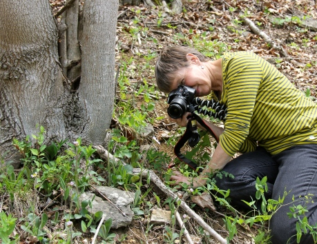 Photographing Robin's Plantain