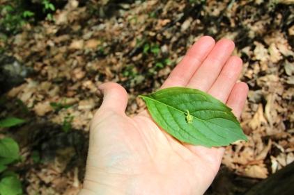 Leaf and flower: Green Violet