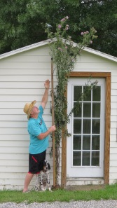 This may be the world's tallest bull thistle: 10 feet, 7 inches tall!