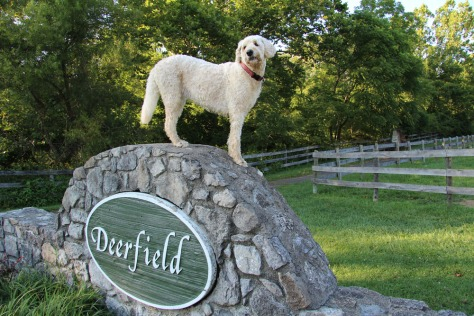 Mari loves the Deerfield Trail