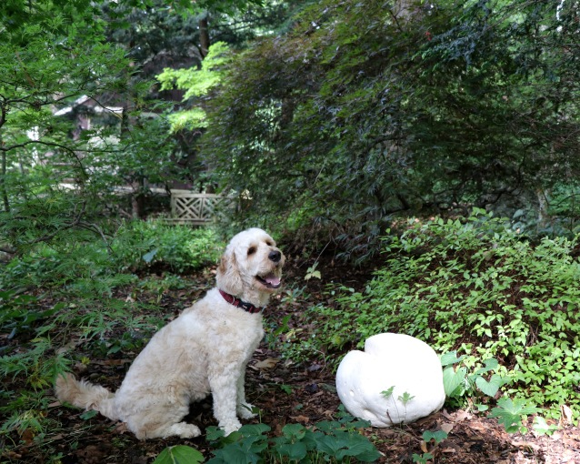 Gracie with a giant puffball mushroom in August.