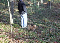 Ground Cedar forms large colonies across the forest floor; here is little Gracie at two months