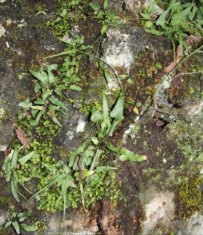 Walking ferns and moss like the same habitats!