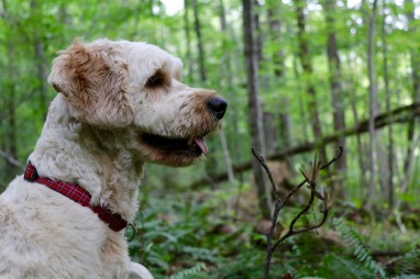 My dog, Gracie, providing the backdrop for the next two shots :)